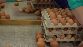 De kip van de eifabriek verpakking stock videobeelden