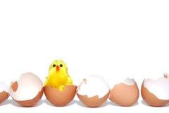 De kip van Pasen Stock Fotografie