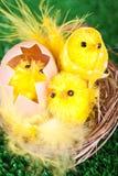 De kippen van Pasen Stock Foto