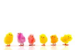 De kippen van Pasen Stock Afbeeldingen