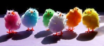 De kippen van Pasen Stock Foto's