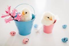 De kippen van Pasen Kleine gele kuikens die in emmers onder bloemen en paaseieren zitten stock foto's