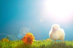 De kippen van Pasen met bloemen op groen gras Royalty-vrije Stock Foto