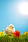 De kippen van Pasen met bloemen op groen gras Stock Foto