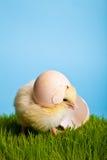 De kippen van Pasen met bloemen op groen gras Royalty-vrije Stock Afbeeldingen