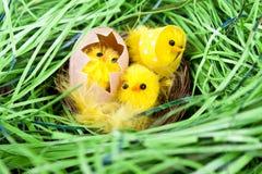 De kippen van Pasen in nest Stock Afbeeldingen