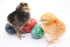De kippenbaby van Pasen Royalty-vrije Stock Afbeelding