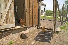 De kippenren van de het landbouwbedrijfkip van vestingmuur royalty-vrije stock afbeeldingen