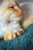 De klauwen van de kat Stock Fotografie