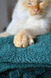 De klauwen van de kat Stock Foto