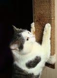 De klauwen van de kattenoefening tegen katten scratcher kras Stock Foto's