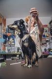 De kleermaker meet een hond Royalty-vrije Stock Afbeeldingen