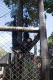De kleine aap is in de kooi royalty-vrije stock afbeelding