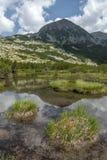 De kleine alpiene meeraffiche met groene vegetatie en de witte zomer betrekt op achtergrond Stock Fotografie