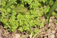 De kleine bladeren van de aardfotografie Stock Foto