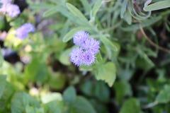 De kleine bloem royalty-vrije stock afbeeldingen
