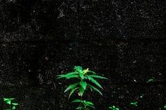 De kleine boom groeit op de rotsmuur, gebruik voor behang of achtergrond royalty-vrije stock afbeelding