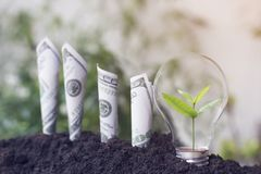 De kleine boomgroei in gloeilamp en van de dollarsrekening de groei omhoog met grond, die geld, besparing en investering, concept stock afbeelding
