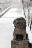 Chinese leeuw in de winter Stock Foto's