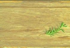 De kleine die takken van de pijnboomboom op de achtergrond, oude houten bladen, droge geel met zonlicht worden geplaatst hoogste  stock foto