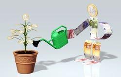 De kleine euro muntstukboom wordt water gegeven in een vaas Royalty-vrije Stock Foto's