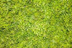 De kleine groene achtergrond van bloembladeren Stock Foto