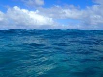 De kleine Hawaiiaanse Schildpad knalt hoofd uit Ondiepe oceaanwateren royalty-vrije stock fotografie
