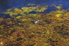 De kleine het sterven rivier werd overwoekerd met moerasinstallaties De verontreiniging van het omringen spreekt overzich, de sne stock afbeeldingen