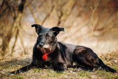 De kleine Hond die van het Grootte Zwarte Gemengde Ras in Droog rusten Royalty-vrije Stock Fotografie
