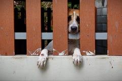 De kleine hond is gesloten in het huis stock afbeelding