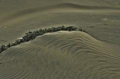 De kleine installaties groeien in het zand Stock Foto