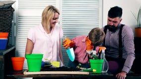 De kleine jongen, samen met zijn ouders, plant bloemen in potten De kleine jongen met zijn ouders bekijkt stock footage
