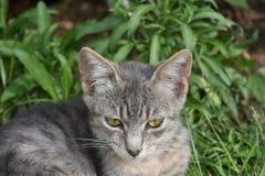 De kleine kat royalty-vrije stock afbeeldingen