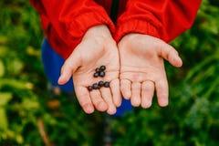 De kleine kinderen` s handen houden rijpe bosbessen op een groen gazon royalty-vrije stock foto