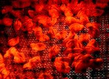 De kleine kippen staken met een infrarode lamp aan Royalty-vrije Stock Foto
