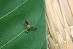 De kleine kleurrijke spinneninzameling Stock Afbeeldingen