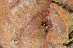 De kleine kleurrijke spinneninzameling Stock Fotografie