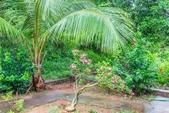 De kleine kokospalmen sluiten mening in een Indische tuin met kleurrijke bloembomen & groenstruiken stock foto