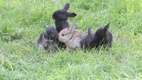 De kleine konijnen zitten op het groene gras stock videobeelden