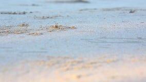 De kleine krab op het strand stock footage