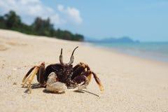 De kleine krab zonnebaadt op het strand stock foto