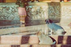 De kleine leuke honden wachten om gasten voor het hotel welkom te heten stock foto's