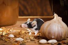 De kleine muis ruikt iets in kelderverdieping Royalty-vrije Stock Foto's