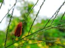 De kleine oranje insecten zijn op groene bladeren royalty-vrije stock afbeelding