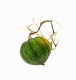 De kleine Pompoen die van de Winter Dode Wijnstok sleept royalty-vrije stock afbeeldingen