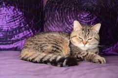 De kleine prinses, Susi Q royalty-vrije stock fotografie