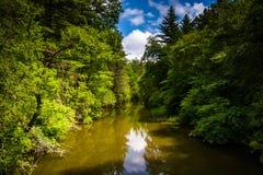 De Kleine Rivier, in het Bos van de Staat van Dupont, Noord-Carolina stock fotografie