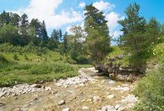 De kleine rivier van de berg Stock Foto