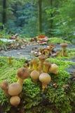 De kleine, ronde paddestoelen groeien op een mos-behandelde stomp in een zonnig de zomerbos royalty-vrije stock fotografie