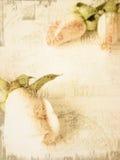 De kleine roze achtergrond van de rozenkaart stock afbeeldingen